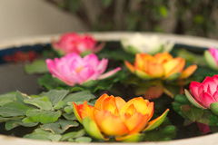 Tropical water lilies in water. Water lilies in water bowl at Bangkok temple Royalty Free Stock Image