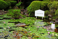 Tropical water lily pond Royalty Free Stock Photos
