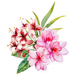 Tropical watercolor flowers Stock Photography