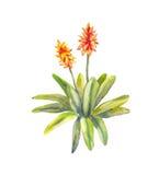 Tropical watercolor orange flower Stock Photo