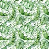 Tropical watercolor seamless pattern with green leaves illustration stock image