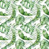 Tropical watercolor seamless pattern with green leaves illustration royalty free stock images