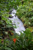 Tropical Waterfall. A stream cascading down through tropical plants Stock Photography