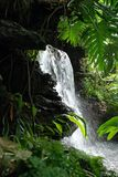 Tropical Waterfall. White water rushing down a waterfall in a tropical environment Royalty Free Stock Image