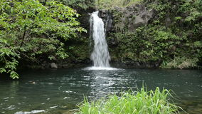 Tropical Waterfall. Close up view of Lower Puaa Kaa Waterfall and a small crystal clear pond, inside of a dense tropical rain-forest, off the Road to Hana stock video