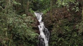 A tropical waterfall flows through a dense rainforest on Bali island, Indonesia. Original, without editing. A tropical waterfall flows through a dense stock video