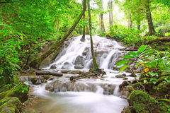 Tropical waterfall in forest Royalty Free Stock Photos