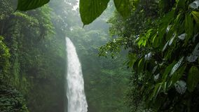 Tropical waterfall hidden in lush jungle green. Green leaves motion by the wind breeze. High humidity stock footage