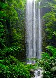 Tropical waterfall in the jungle. Tropical waterfall deep in the jungle Stock Photography