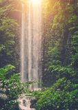 Tropical waterfall in a jungle. Tropical waterfall in a green jungle Stock Photo