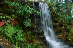 Tropical Falls. A tropical waterfall located in Rainbow Springs State Park in Florida royalty free stock photo