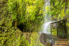 Tropical waterfall, madeira Royalty Free Stock Photo