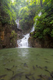Tropical Waterfall Phlio Stock Photography