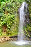 Tropical waterfall in portrait aspect. Tropical waterfall in caribbean  in portrait aspect Royalty Free Stock Photography