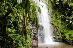 Tropical Waterfall Rainforest Costa Rica Royalty Free Stock Photos
