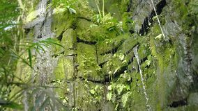 Tropical waterfall in the tropical rainforest. Falling and running water on rock, drops falling into water and stones. Tropical waterfall in tropical rainforest stock footage