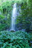 Tropical waterfall of St. Rose on La Reunion island Royalty Free Stock Photography