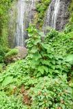 Tropical waterfall of Takamaka on La Reunion island Stock Images