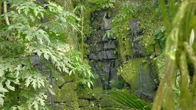 Tropical waterfall in the tropical rainforest. Falling and running water on rock, drops falling into water and stones. Tropical waterfall in tropical rainforest stock video