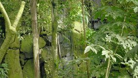 Tropical waterfall in the tropical rainforest. Falling and running water on rock, drops falling into water and stones. Tropical waterfall in tropical rainforest stock video footage