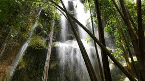Tropical Waterfalls  stock video