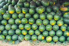 Tropical watermelon. Asian tropical fruits for sale.  Royalty Free Stock Images