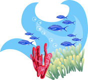 Tropical Waters Stock Photos