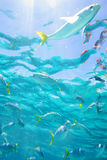 Tropical Waters Stock Photography