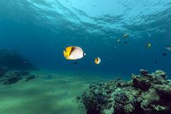 Tropical waters of the Red Sea. Stock Photo
