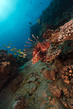 Tropical waters of the Red Sea. Royalty Free Stock Photography