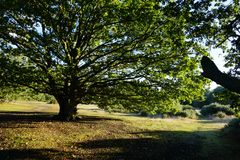 Tree of Life & Landscape in Mitcham stock image