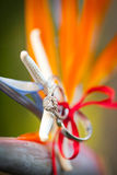Tropical wedding rings. With bow and macro on a bird of paradise flower Stock Images