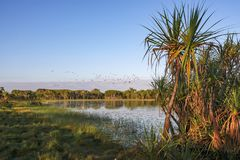Free Tropical Wetland With Paperbark Melaleuca Reflected In Water, Darwin, Australia Stock Photo - 159659870