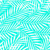 Tropical white and green palm tree leaves seamless pattern.  Stock Image