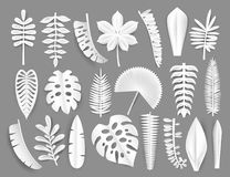Tropical white paper cut leaves. Trendy summer exotic plants elemets with shadow isolated on grey background. Origamy. Style vector illustration Stock Image