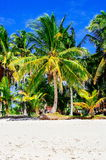 Tropical white sand beach with green palm trees. Exotic island paradise Stock Photography