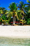 Tropical white sand beach with green palm trees. Exotic island paradise.  Royalty Free Stock Photos