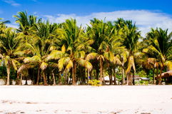 Tropical white sand beach with green palm trees. Exotic island paradise.  Stock Photo