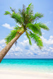 Tropical white sand beach with palm tree Royalty Free Stock Photography