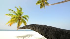 Tropical white sand beach with palm trees. Maldives stock video footage