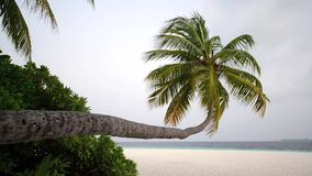 Tropical white sand beach with palm trees. Maldives stock video