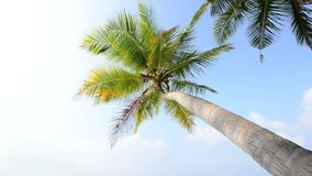 Tropical white sand beach with palm trees. Maldives stock footage