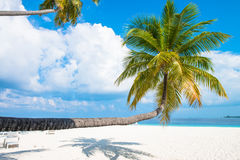 Tropical white sand beach with palm trees. Maldives Royalty Free Stock Photography