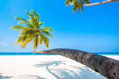Tropical white sand beach with palm trees Royalty Free Stock Photos