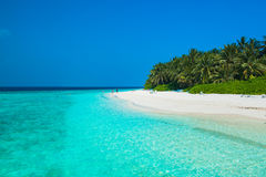Tropical white sand beach with palm trees. Maldives Stock Photos