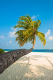 Tropical white sand beach with palm trees Royalty Free Stock Image