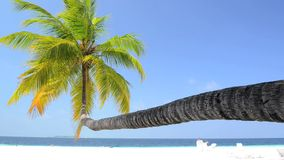 Tropical white sand beach with palm trees. At Maldives stock video footage