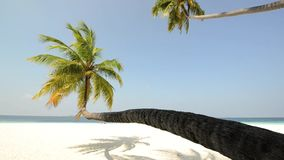 Tropical white sand beach with palm trees. At Maldives stock video