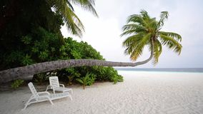 Tropical white sand beach with palm trees stock video