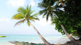 Tropical white sand beach with palm trees stock footage